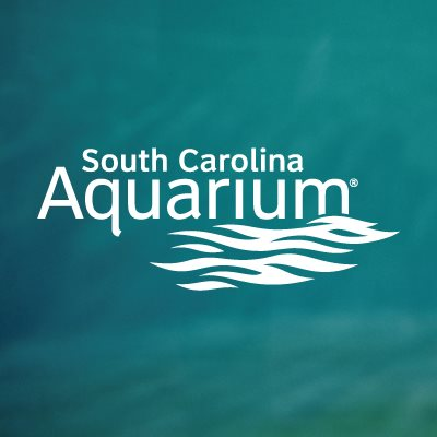 Sc Aquarium Charleston Shines